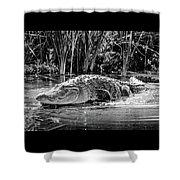 Alligator Bags Of Port Aransas Shower Curtain