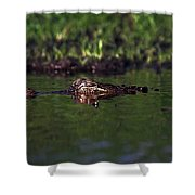 Alligator Eyes Shower Curtain