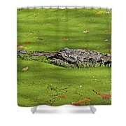 Alligator In Sun Shower Curtain