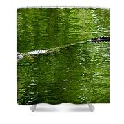 Alligator In Wait Shower Curtain