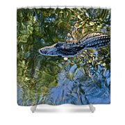 Alligator Stalking Shower Curtain
