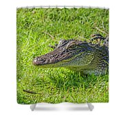 Alligator Up Close  Shower Curtain