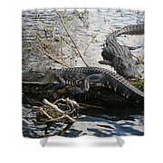 Alligators In An Everglades Swamp Shower Curtain