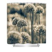 Allium 2 Shower Curtain