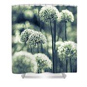 Allium 3 Shower Curtain