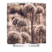 Allium 4 Shower Curtain
