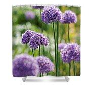 Allium 5 Shower Curtain