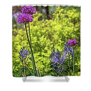 Allium And Camassia Shower Curtain