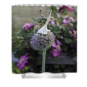 Allium Blossom With Cap Shower Curtain