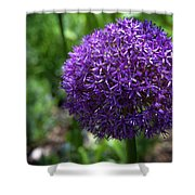 Allium Gladiator Closeup Shower Curtain