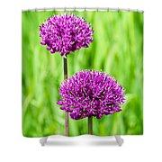 Alliums Shower Curtain