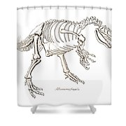 Allosaurus Skeleton Shower Curtain