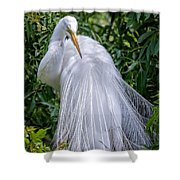 Alluring In White Shower Curtain