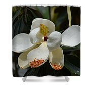 Alluring Moment Shower Curtain