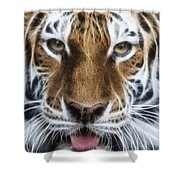 Alluring Tiger Shower Curtain