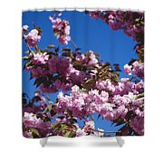 Almond Flowers Shower Curtain
