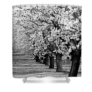 Springtime In The Almond Fields Shower Curtain