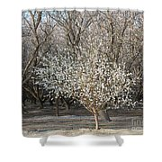 Almond Orchard 1 Shower Curtain
