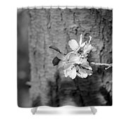 Almond Orchard 2 Shower Curtain