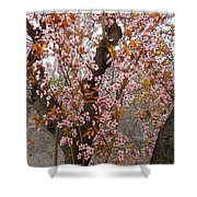 Almond Tree Flowers 05 Shower Curtain