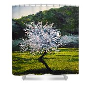 Almond Tree In Blossom Shower Curtain