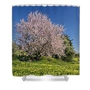 Almond Tree In Meadow Shower Curtain