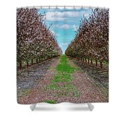 Almond Trees Of Button Willow Shower Curtain