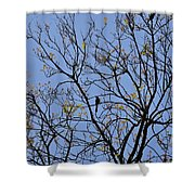Almost Bare With Birds II Shower Curtain