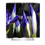 Almost Blooming - The Iris Shower Curtain