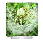 Almost Dandy Shower Curtain