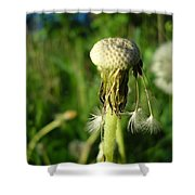 Almost Gone Dandelion Seeds Shower Curtain