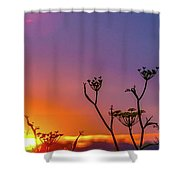Almost Gone Shower Curtain