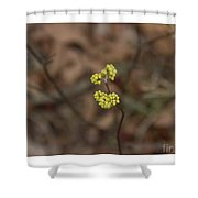 Almost Spring Shower Curtain