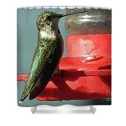 Almost Time To Fly To South America Shower Curtain