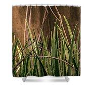 Aloe 3 Shower Curtain