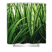 Aloe 5 Shower Curtain