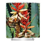 Aloe Bloom Desert Garden Shower Curtain