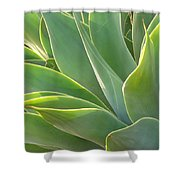 Aloe Shower Curtain
