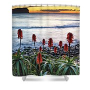 Aloe Vera In Flower At The Seaside Shower Curtain