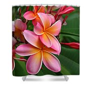 Aloha Lei Pua Melia Keanae Shower Curtain