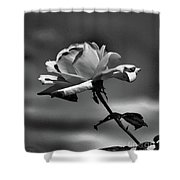 Alone I Stand Shower Curtain