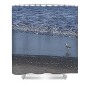 Alone In The Sand Shower Curtain