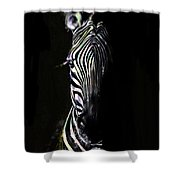 Zebra Fade Into Light Shower Curtain