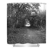 Along A Woodland Path Shower Curtain