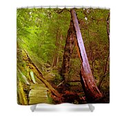 Along The Way  Shower Curtain