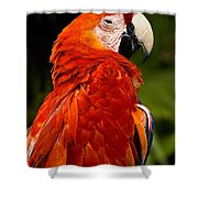 Aloof In Red Shower Curtain