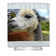 Alpaca Blue Shower Curtain