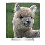Alpaca Smile Shower Curtain