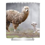 Alpacas Mum And Baby Shower Curtain