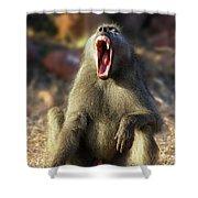 Alpha Baboon Yawning, Kruger Park Shower Curtain